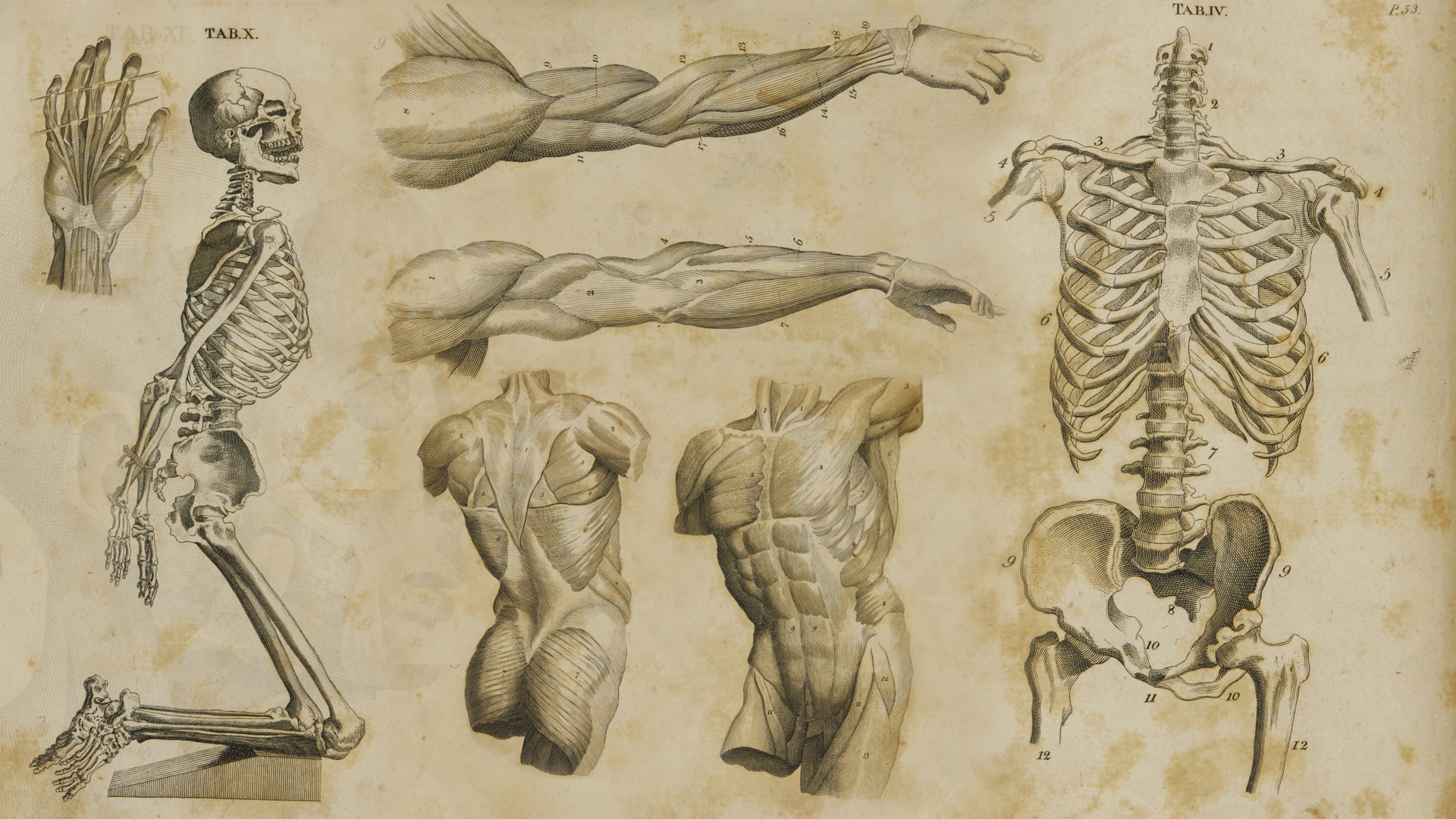 Anatomy Seminars Samuel D Hodge Jr
